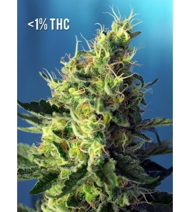 Sweet Pure CBD ®